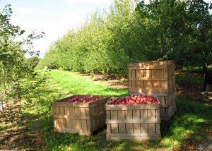 apple_crates