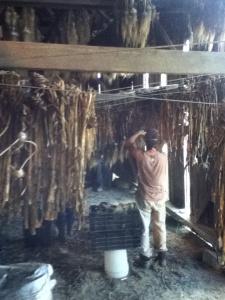 Riverland garlic trimming 2013